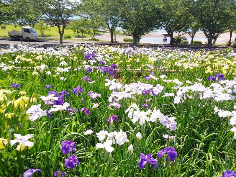 初立池公園2