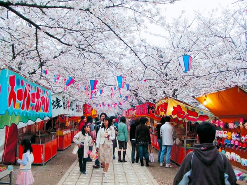 諏訪の桜トンネル_豊川市