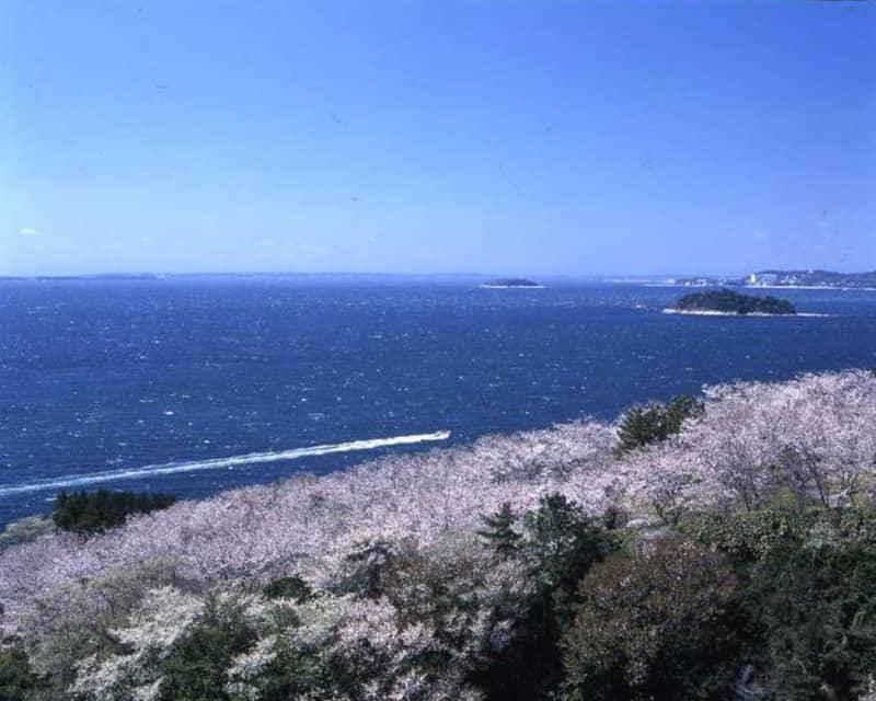 西浦温泉桜まつり_蒲郡市