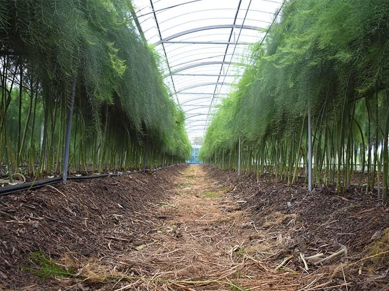 竜髭菜儂人の畑