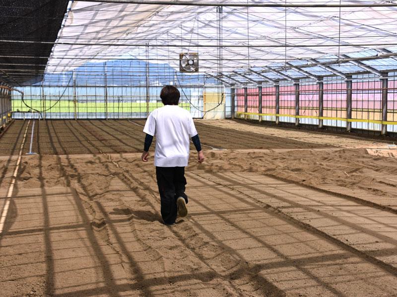ラディッシュの栽培ハウス