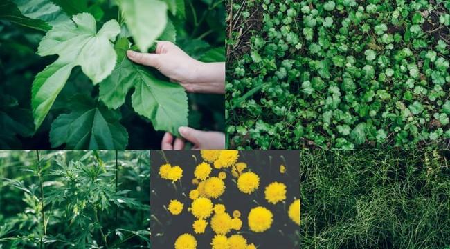 東三河産の植物