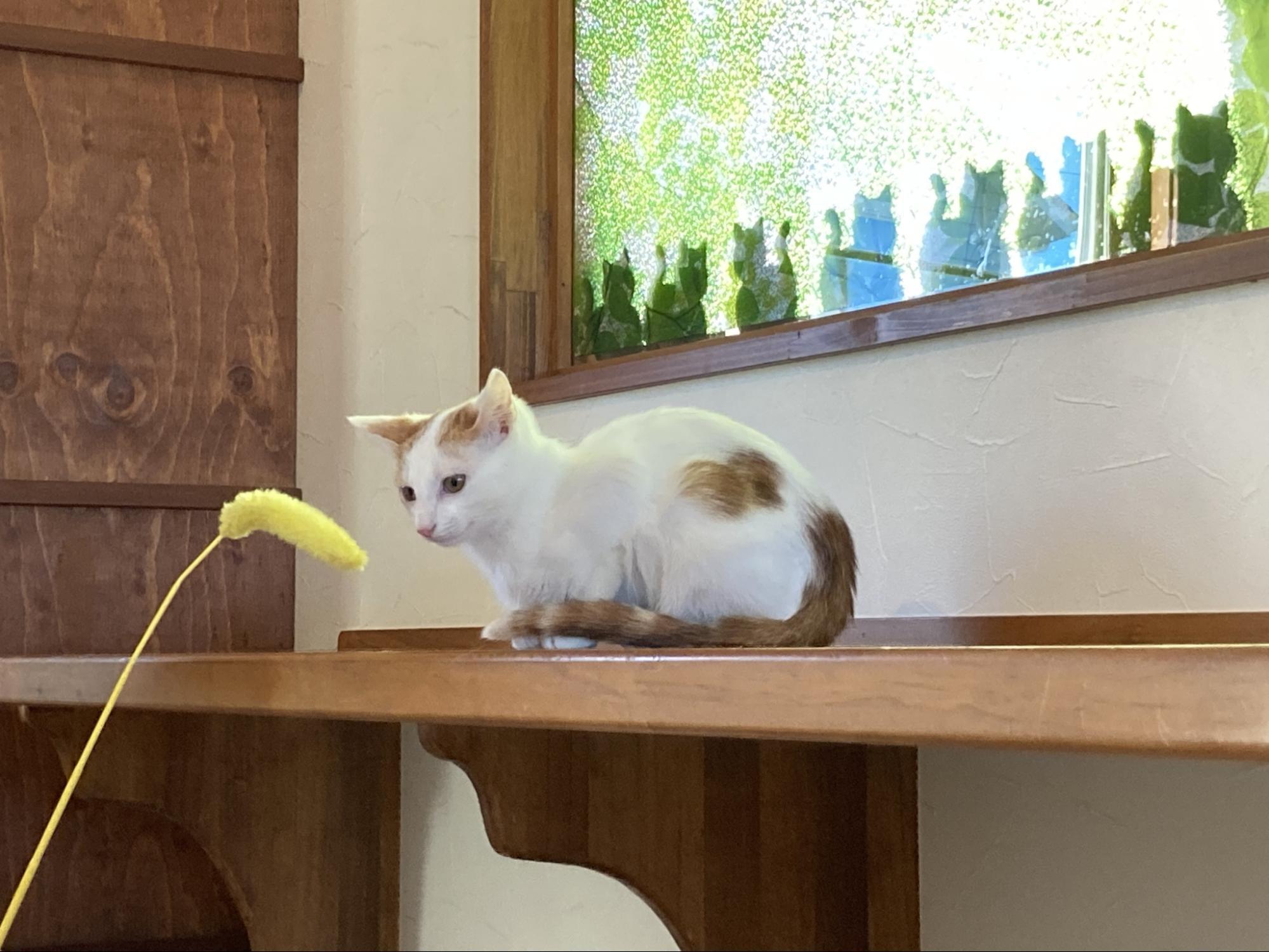 保護猫カフェTORMENTA_様子3