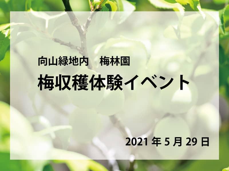 梅収穫体験イベント